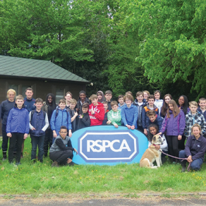 Team of pupils muck out at donkey and horse rehabilitation centre