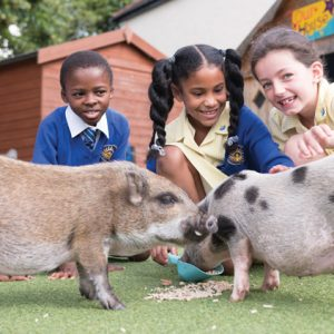 Pair of micro-pigs join school to help develop pupils' creative writing