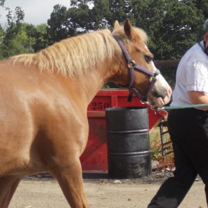 School uses equine therapy for pupils with ADHD, autism and behavioural issues