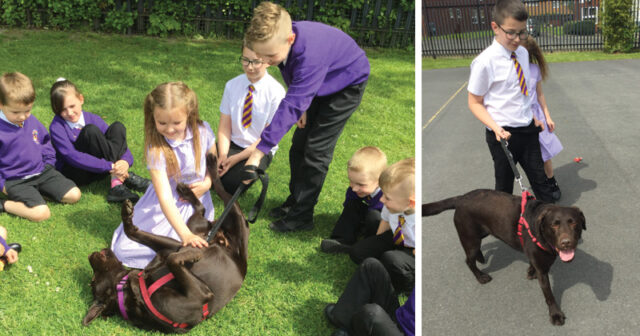 Primary school recruits therapy dog to boost pupil wellbeing